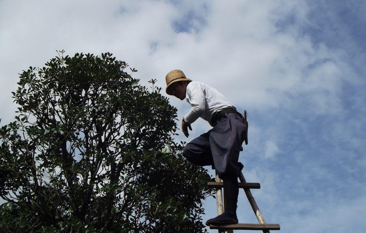 Les périodes adéquates pour procéder à un élagage d'arbres