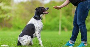 Avoir des animaux de compagnie assurée